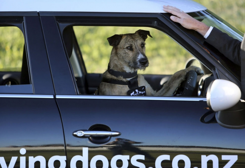 Review Campaign: Driving Dogs