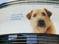 Quảng cáo tương tác siêu dễ thương của trung tâm bảo vệ động vật Battersea